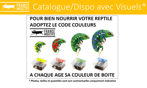 Catalogue france insectes